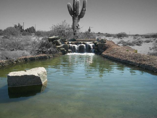 DesertWaterfallSaguaro